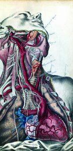 Erklarung der anatomisch-chirurgischen Abbildungen