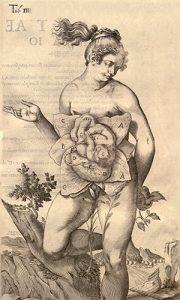 Casserius image