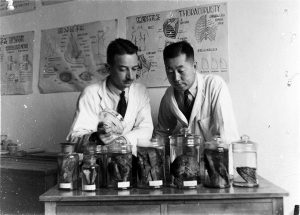 Winston W. Pettus (left) and Ying-Kai Wu (right) examine lung specimens, 1945.