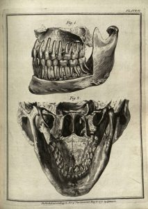 The natural history of the human teeth, 1865.