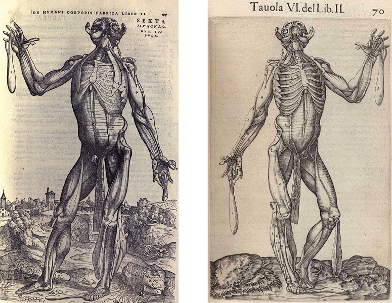 Vesalius and Valverde images side-by-side