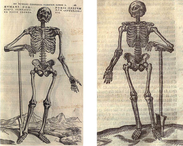 Vesalius and Lowe images side-by-side